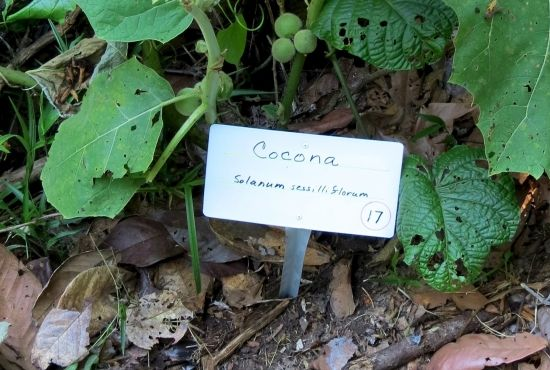 Guía del sendero de plantas medicinales de Heliconia